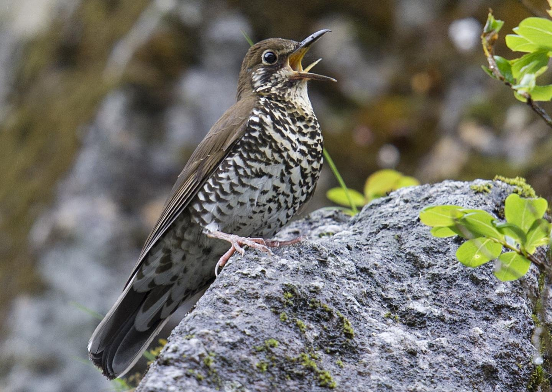 птицы фото и их названия фотосъемка предметное