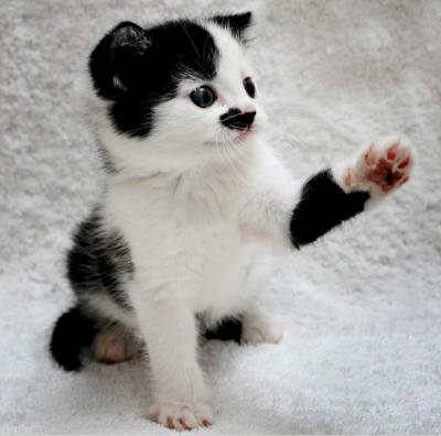 """Ученые: Найдена причина рождения """"котов-Гитлеров"""""""