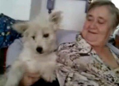 Жительница Бурятии научила собаку говорить слово «мама»