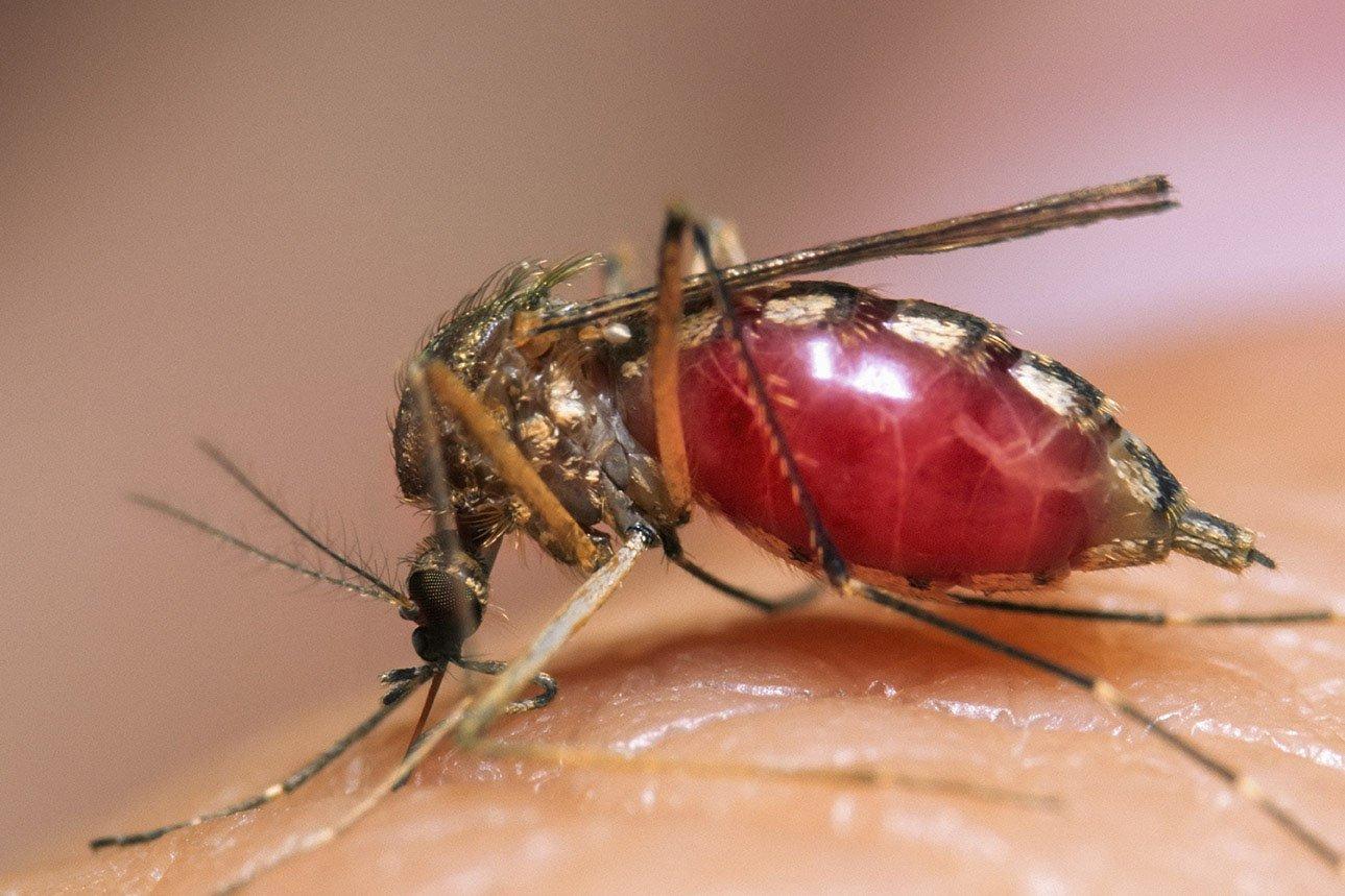Почему так много комаров в 2018 году