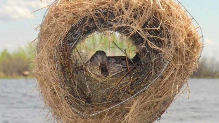 Гнезда для диких уток своими руками