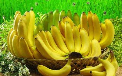 Ученые: Бананы помогают диагностировать рак кожи
