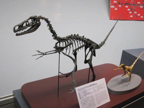 Ученые: В Японии открыт седьмой вид динозавров