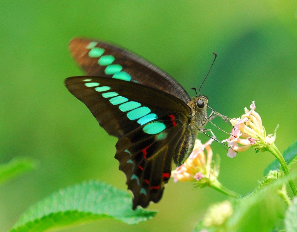 Бабочка прием в сексе