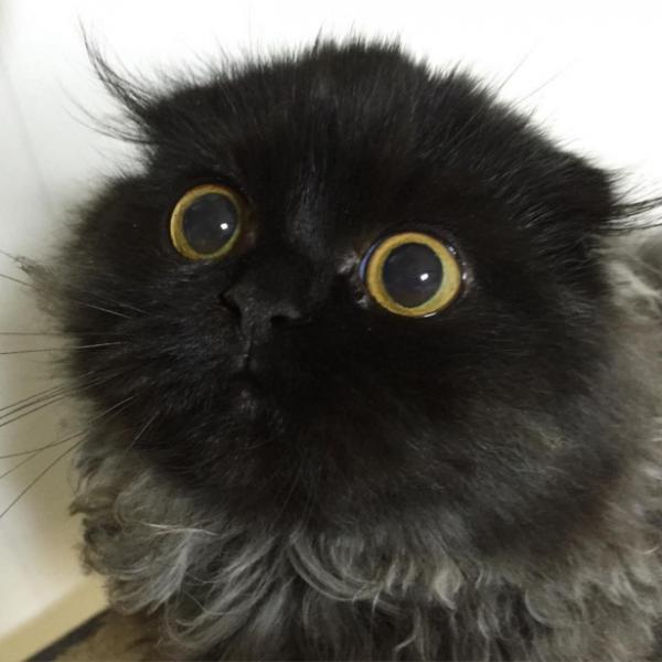Кот с бездонными глазами стал звездой Instagram