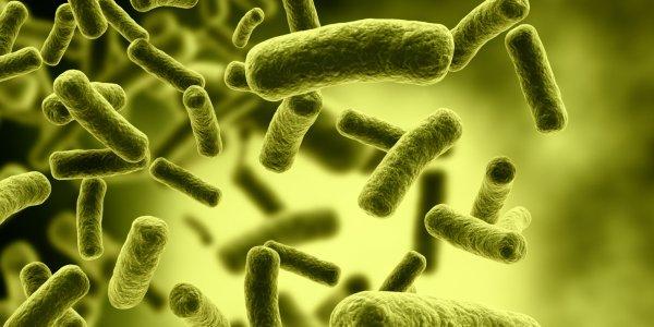 Ученые: Полезные бактерии в кишечнике влияют на ожирение и диабет