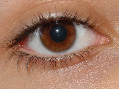 Японские ученые создали искусственную клетчатку глаз