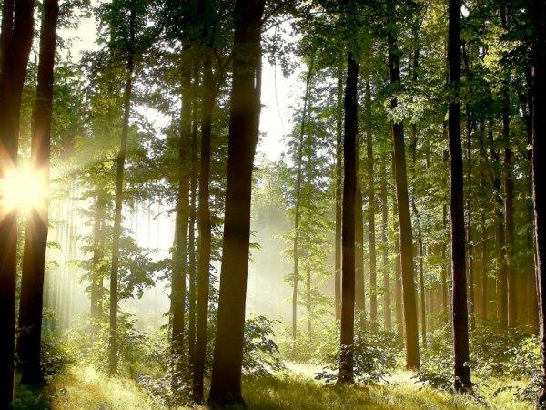 Ученые: В Канаде обнаружен самый древний кусок окаменевшей сосны