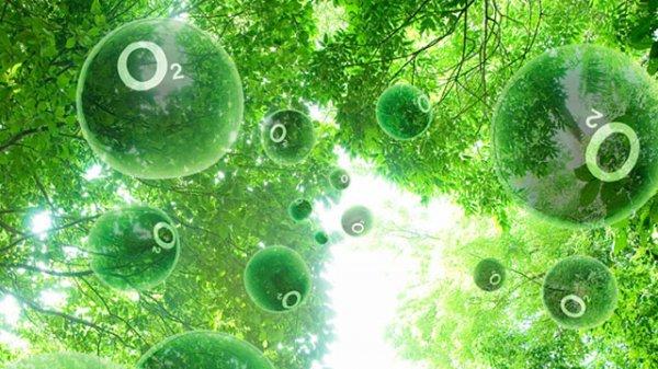 Ученые: Фотосинтез появился 3,5 млрд лет назад
