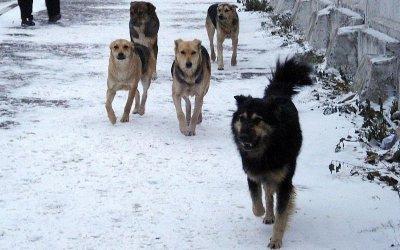 В Саратовской области собаки искусали маленьких детей