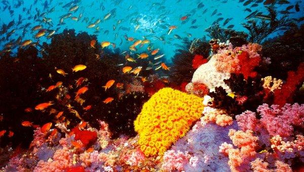 Кораллы Большого Барьерного рифа оказались на грани исчезновения