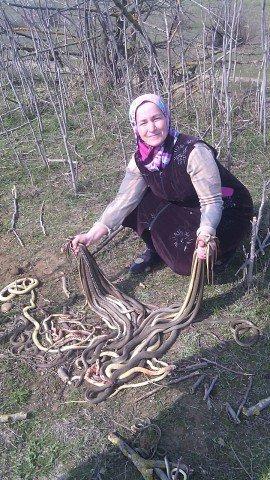 В Дагестане пенсионерка убила 80 змей, создавших гнездо в ее огороде