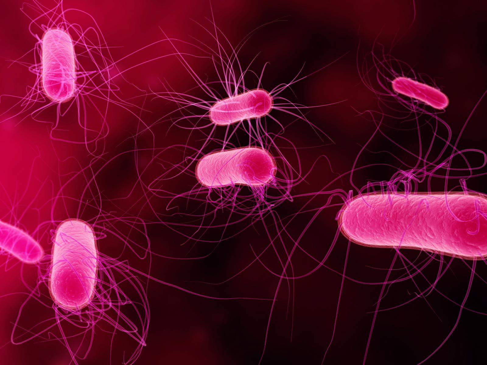 бактерия картинки