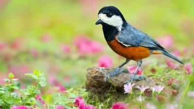 Ученые обнаружили способность птиц составлять предложения