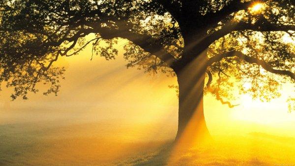 Ученые: Солнечный свет поможет в производстве химвеществ и энергии
