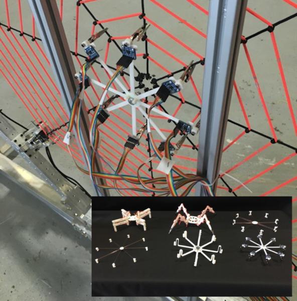 Робопаук помог физикам научиться ориентироваться на паутине