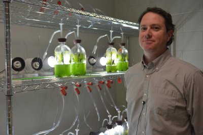 Ученые: Бензин может расти на деревьях