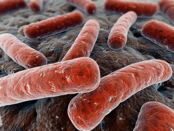 Ученые: Бактерии туберкулеза строят «пищевые» гавани в иммуноцитах