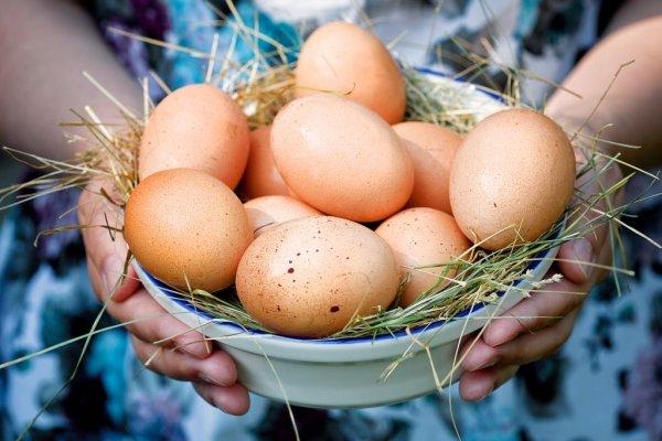Выведенные в Японии куры будут нести безаллергенные яйца