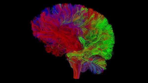 Ученые: Мозг самостоятельно отсеивает и забывает ненужную информацию