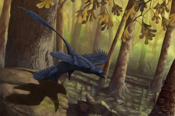 Ученые: Птицеподобные динозавры пережили вымирание благодаря семенам