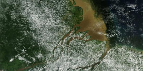 В устье Амазонки обнаружен коралловый риф протяжностью в тысячу километров