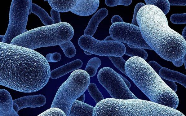 Ученые: Бактерии способны превращать воду в лед