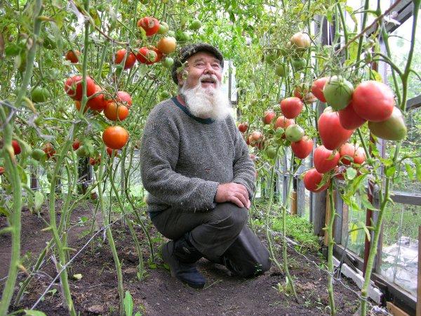 Ученые: Работа с землей на даче продлевает жизнь
