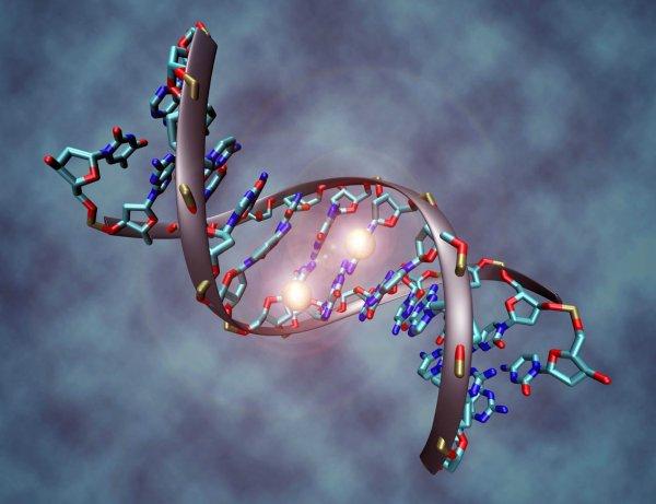 Сегодня отмечается Международный день ДНК