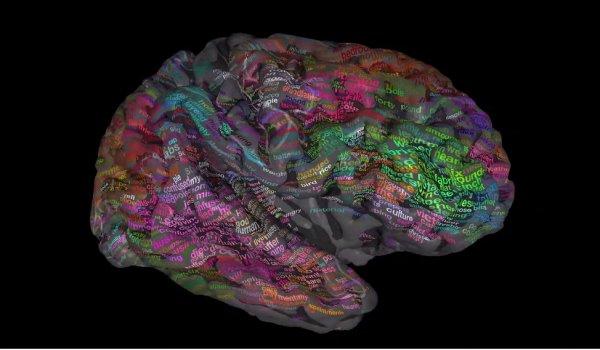 Ученые составили подробную карту словаря значений мозга