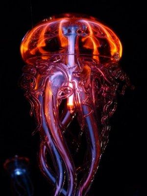 Учёные: Новый вид медуз-НЛО обнаружен в Тихом океане
