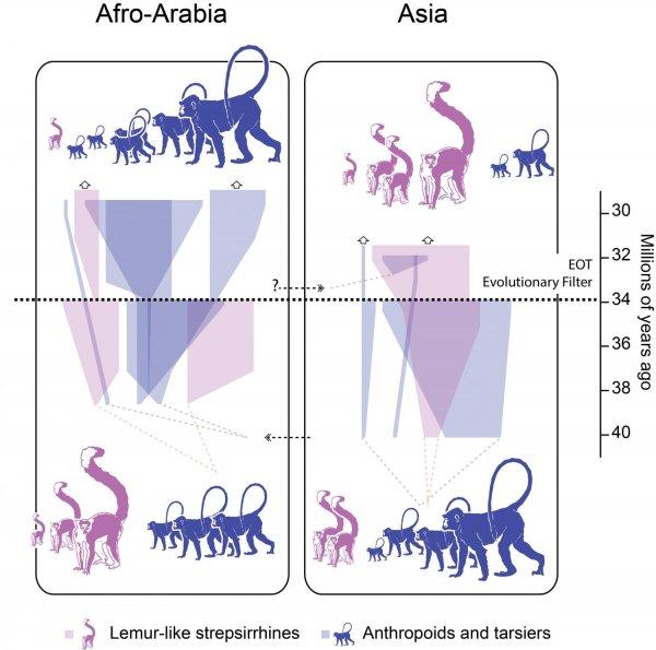 Обнаруженные в Китае окаменелости приматов помогли проследить изменения климата