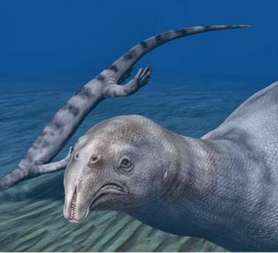 Ученые провели исследования доисторической травоядной рептилии