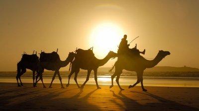 Генетики раскрыли тайну происхождения верблюдов