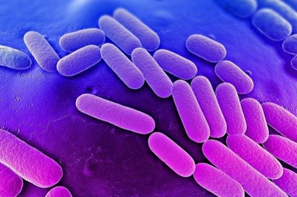 Ученые считают, что бактерии обладают характером