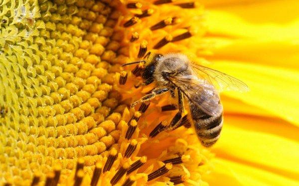 Ученые сообщили о гибели около половины всех пчел в США