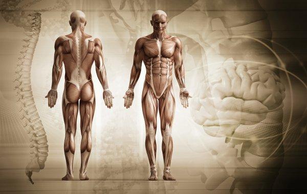 Ученые определили 6 самых бесполезных частей человеческого тела