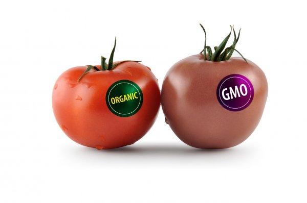 Ученые доказали безвредность ГМО-продуктов