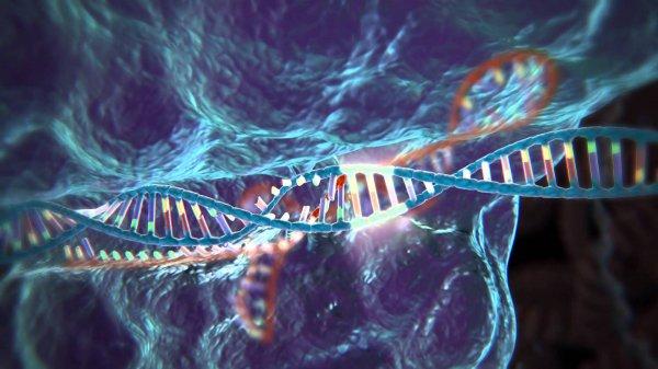 Ученые успешно «вырезали» гены ВИЧ из ДНК живых организмов