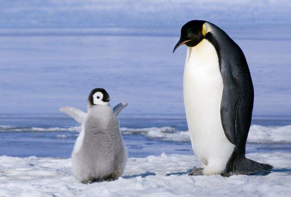 """Северные """"завоеватели"""" угрожают морской жизни Антарктики"""