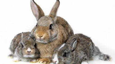 Зоозащитники составили рейтинг животных, которые страдают в опытах