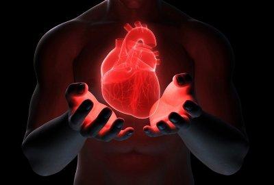 Ученые: Способность сердца к регенерации связана с длиной теломер