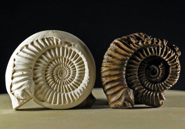 Ученые: Мел-палеогеновое вымирание коснулось жизни во всех широтах