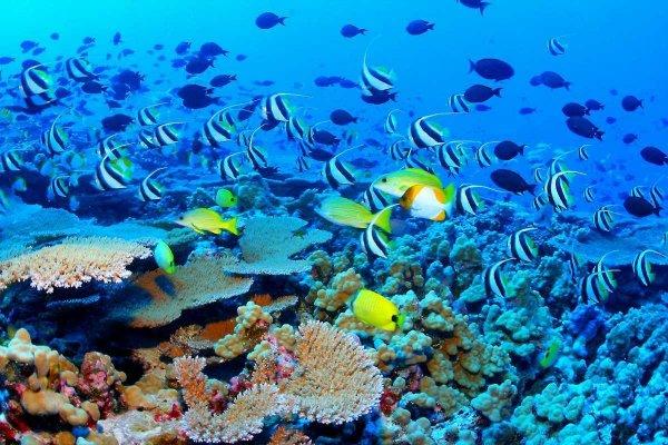 Ученые: Рыбы способны распознавать человеческие лица