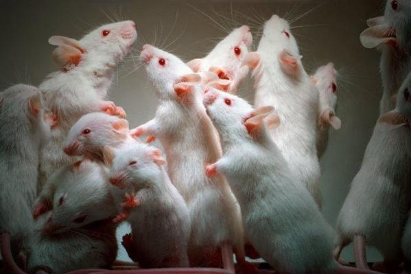 Немецкие ученые выяснили, что заражение червями-паразитами полезно для здоровья