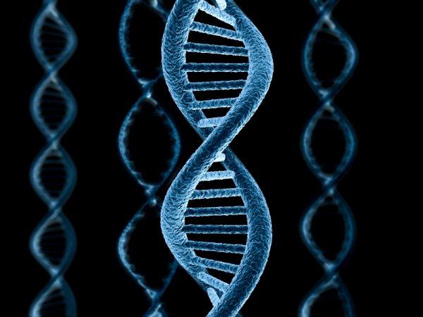 Ученые подтвердили, что ДНК содержит второй слой информации