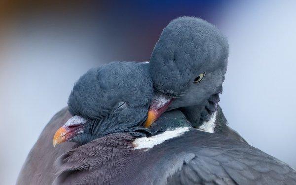 Ученые: Ради любви некоторые птицы готовы отказаться от пищи