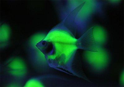 В океане оказалось гораздо больше светящихся рыб