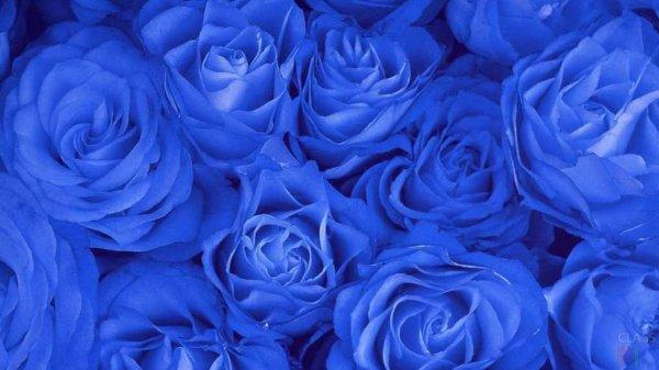 Учёные выяснили, что синий цвет помогает принимать важные решения