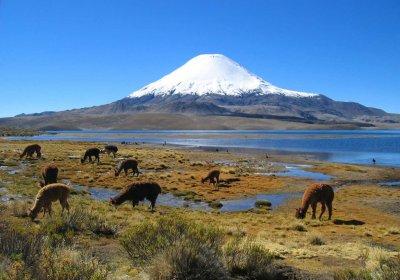 Ученые озвучили причины массового вымирания животных в Патагонии
